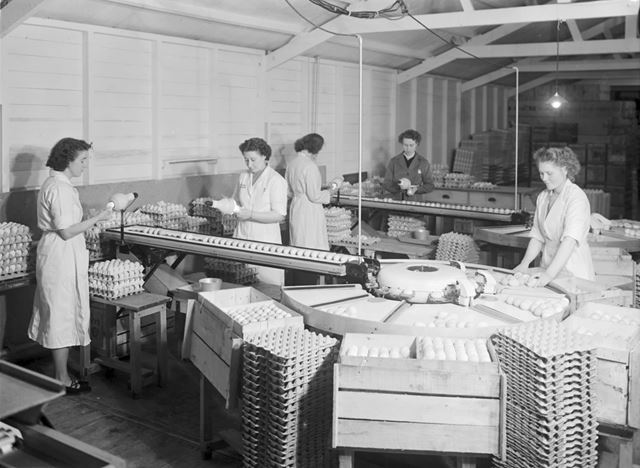 Thornhill and Sons - Egg Packing Factory
