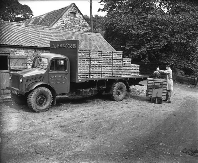 Thornhill and Sons - Packing crated chickens onto a lorry