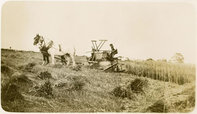 Harvest With A Self Binder at Hilltop Farm