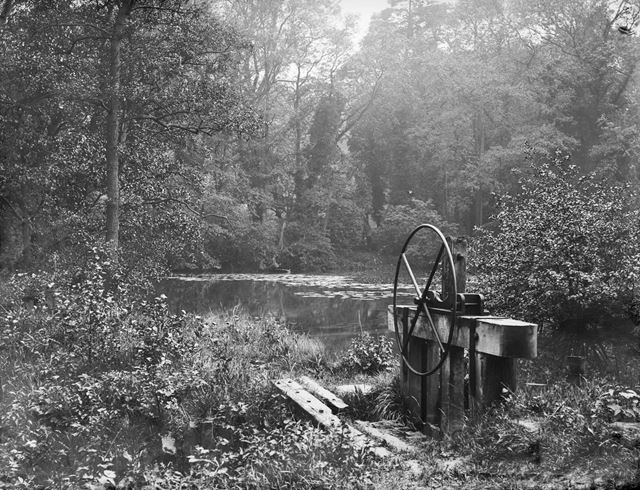 The pond in the woods at Alderwasley