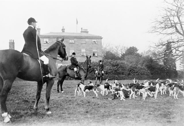 Meynell hounds at Allestree Hall