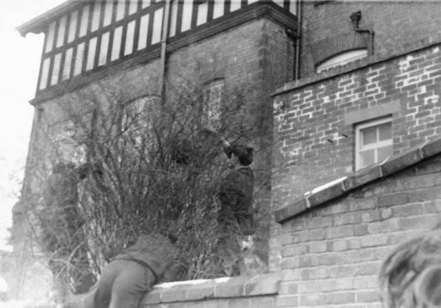 Shrovetide Football Game: the ball being retrieved from the middle of a bush